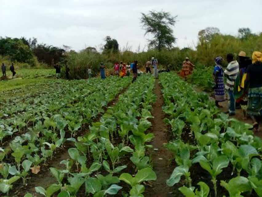 Boosting livelihoods and food availability through irrigation schemes in Mozambique: an example from Munguissa